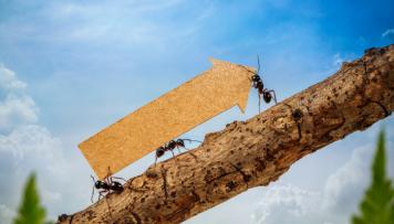 Fuehrungskraeftefeedback Entwicklung Ameisen mit Pfeil