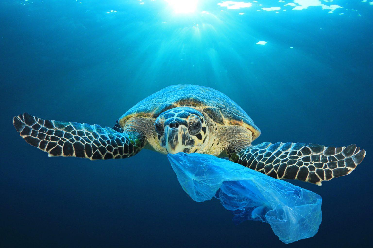 Schildkröte isst Plastiktüte
