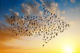 Themenfokussierte Mitarbeiterbefragung Vogelschwarm in Pfeilform
