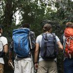 Klassische Mitarbeiterbefragung Zusammen im Wald wandern
