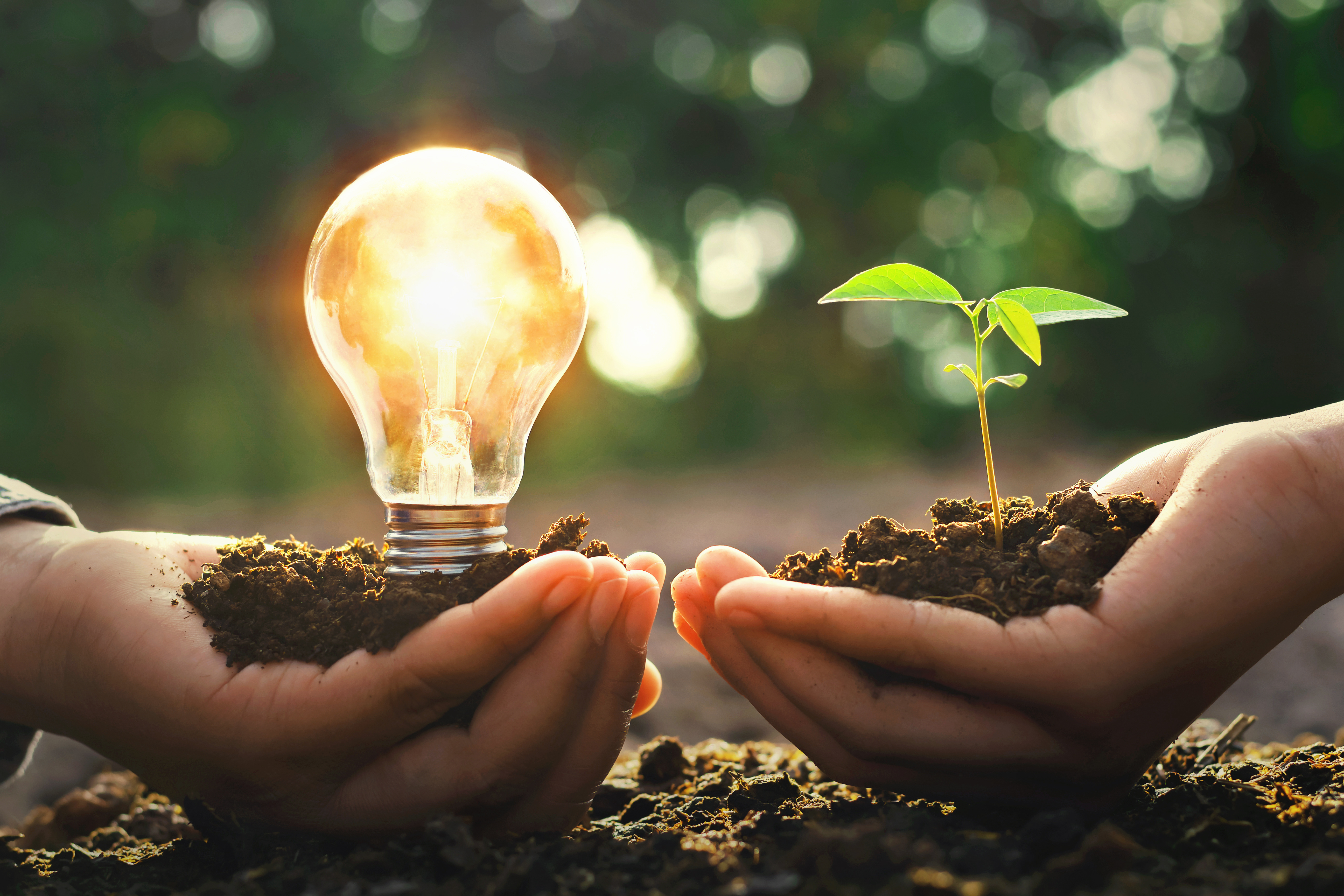 Glühbrine auf Erde in Hands vs. Pflanze in Hand erneuerbare Energien