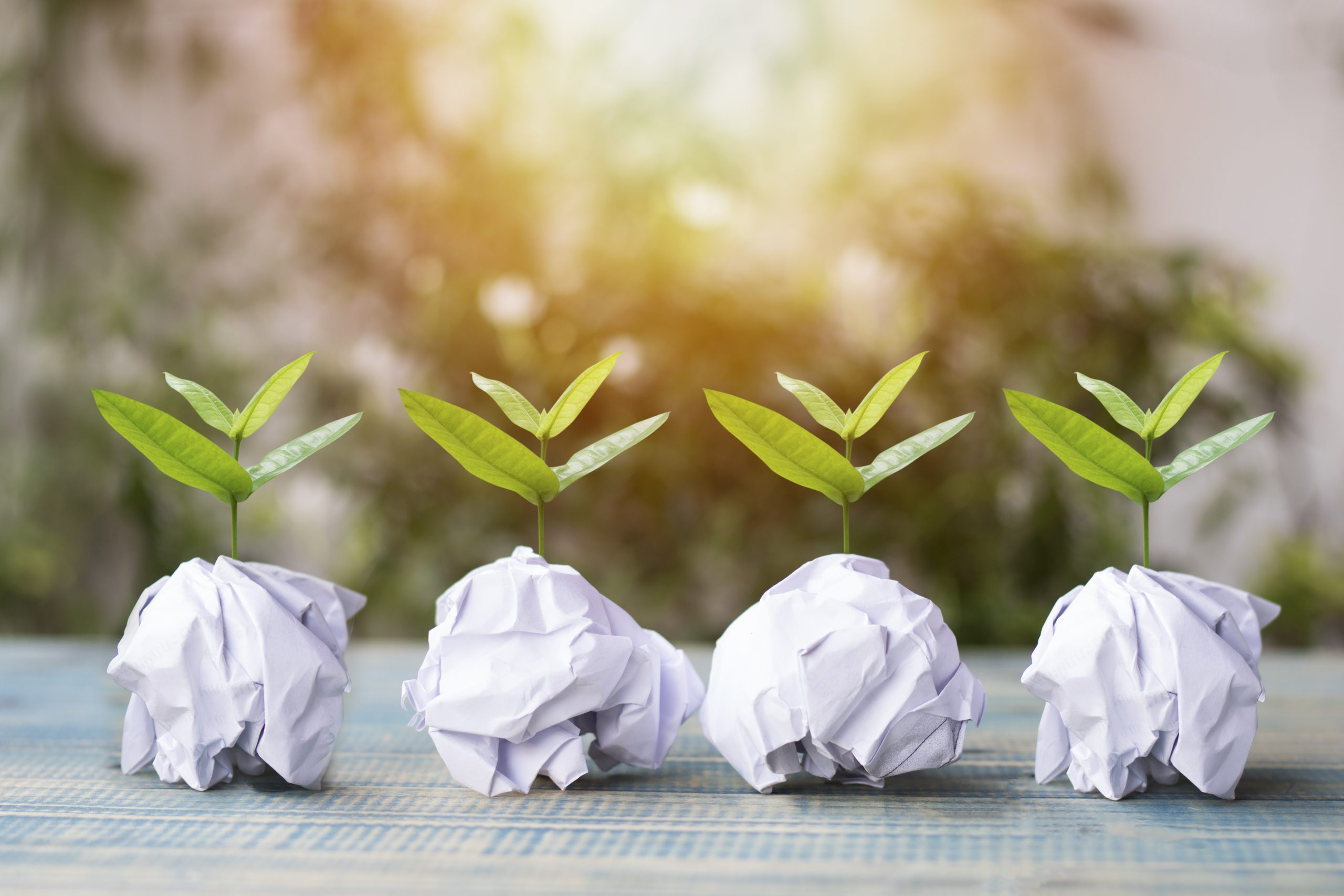 Vier kleine Bäume wachsen aus Papierball