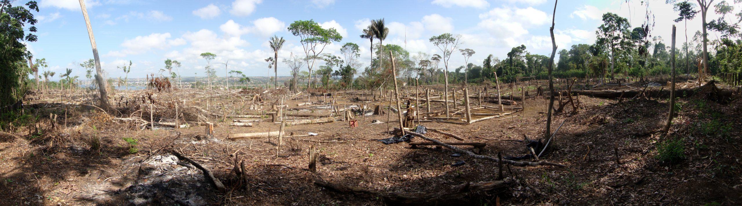 Abholzung im Amazonas - zerstörter Regenwald
